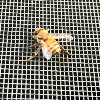 Interior Screening with a bee on it